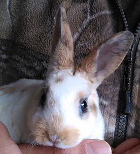 Baby Buddy Bunny