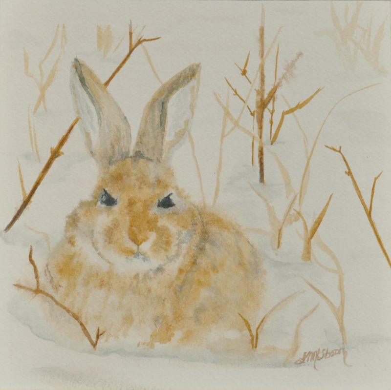 Cottontail in Snow Painting