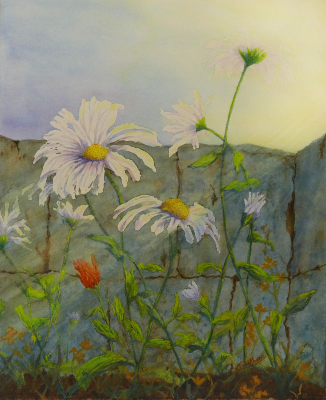 Painting of White Daisies in a Garden Wall