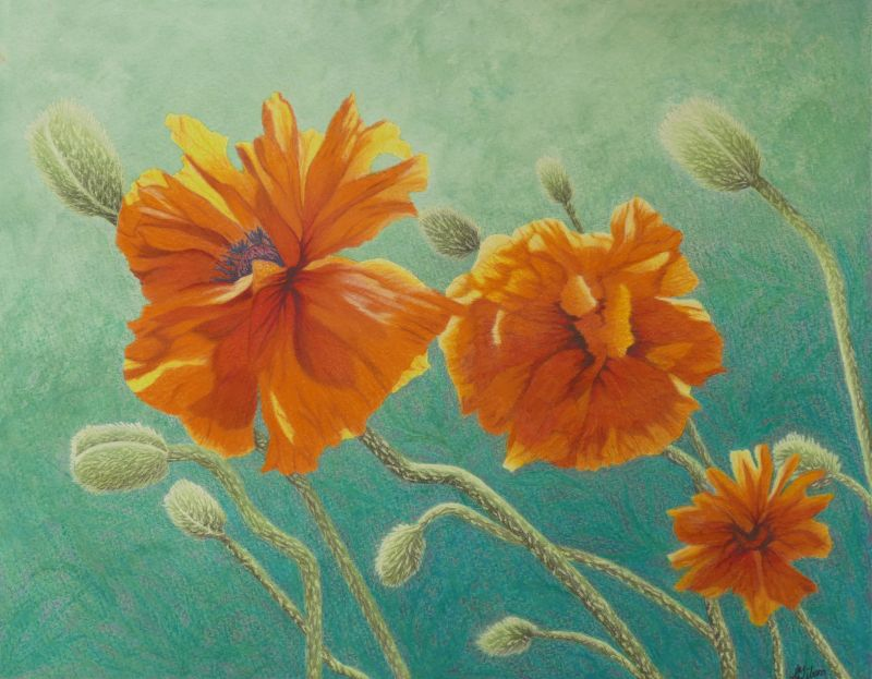 "Orange Poppy Painting titled ""Reaching Out"""