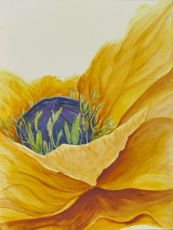 Gold Poppy Watercolor Painting