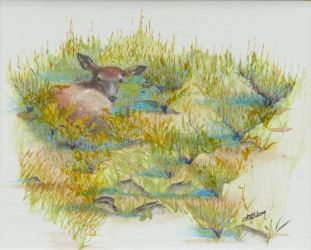 Layin' Low Calf Elk Painting by Lisa Gibson, Artist.