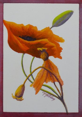 Life Well Lived poppy painting by Lisa Gibson