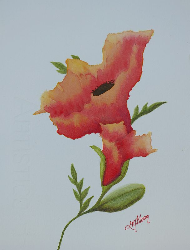 Open Up Study Poppy Painting by Lisa Gibson